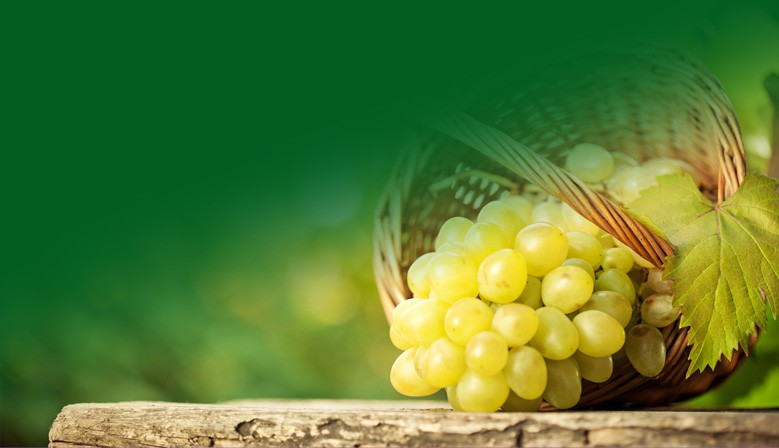 Wijn & Cultuurhoeve THABOR